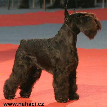 http://www.nahaci.cz/images/2003Zahr5/2ZG03_BGIIKnmac5855.jpg