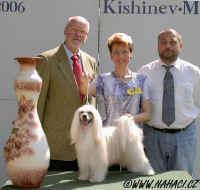 BEST IN SHOW 2006 - Chisinau - Chinese Crested Dog Powder Puff Ich. Cody z Haliparku, BOG judge Cristian Stefanescu, RO; BIS judge Karl Reisinger, A