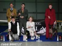 BEST IN SHOW - Club show KCHN (173 dogs) - BIS Chinese Crested Dog Powder Puff Ch. Oliver Modry kvet, owner Libu�e Brychtova, judges: Hans v.d. Beg (NL) + Tino Pehar (CRO). Many thanks for judging!