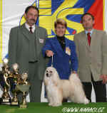 BEST IN SHOW CACIB Praha 2006 - Chinese Crested Dog Powderpuff - Ich. Cody z Haliparku, owner: Brychtov� + Jansa, judge: Mr. Miroslav V�clav�k, CZ
