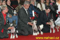 World dog show - BOB competition.